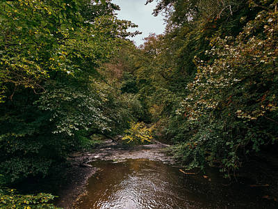 David Gallie Royalty-Free and Rights-Managed Images - Calderglen Autumn 2021 - 08 by David Gallie