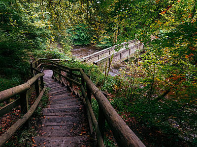 David Gallie Royalty-Free and Rights-Managed Images - Calderglen Autumn 2021 - 09 by David Gallie