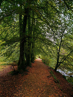David Gallie Royalty-Free and Rights-Managed Images - Calderglen Autumn 2021 - 12 by David Gallie