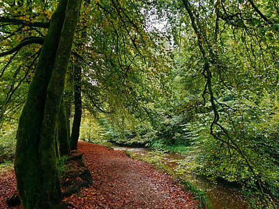 David Gallie Royalty-Free and Rights-Managed Images - Calderglen Autumn 2021 - 14 by David Gallie