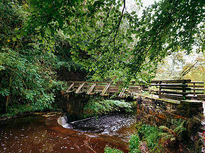 David Gallie Royalty-Free and Rights-Managed Images - Calderglen Autumn 2021 - 15 by David Gallie