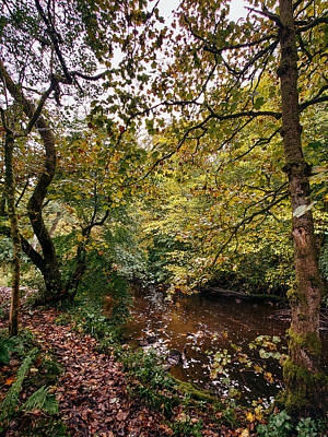 David Gallie Royalty-Free and Rights-Managed Images - Calderglen Autumn 2021 - 20 by David Gallie