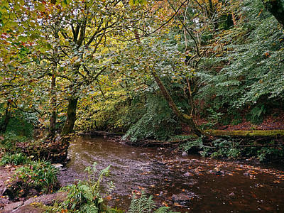 David Gallie Royalty-Free and Rights-Managed Images - Calderglen Autumn 2021 - 21 by David Gallie