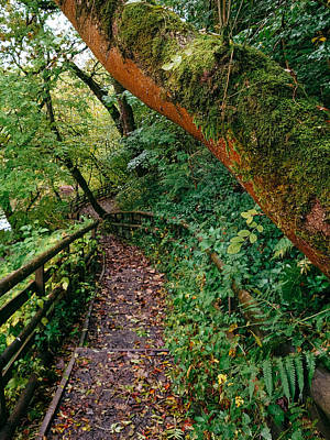 David Gallie Royalty-Free and Rights-Managed Images - Calderglen Autumn 2021 - 22 by David Gallie