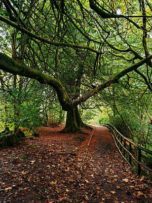 David Gallie Royalty-Free and Rights-Managed Images - Calderglen Autumn 2021 - 23 by David Gallie