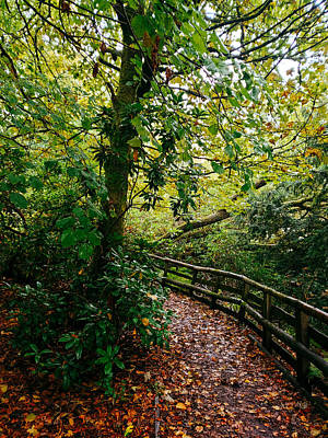 David Gallie Royalty-Free and Rights-Managed Images - Calderglen Autumn 2021 - 24 by David Gallie