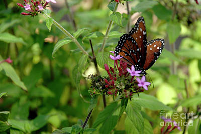 Photograph - California Butterfly by Julieanne Case