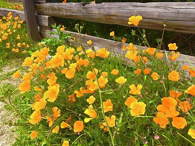 Royalty-Free and Rights-Managed Images - California Poppies on Carmel beach by Luisa Millicent
