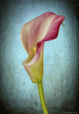 Achieving - Calla 682 by Mike Penney