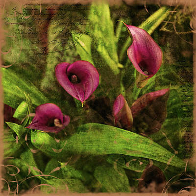 Abstract Animalia Royalty Free Images - Calla Lilies  Royalty-Free Image by Bellesouth Studio