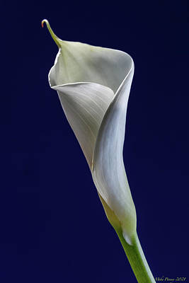 Sean - Calla Lily 010 by Mike Penney