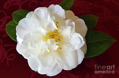Namaste With Pixels Royalty Free Images - Camellia on Burgundy Royalty-Free Image by Julieanne Case