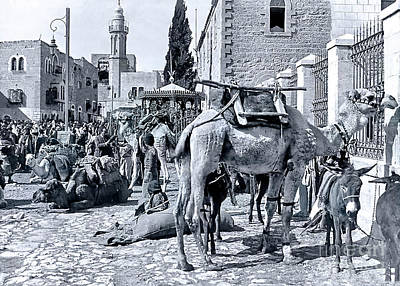 Wild Horse Paintings - Camels at Manger Square by Munir Alawi