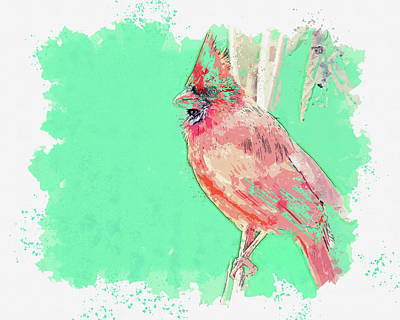 Royalty-Free and Rights-Managed Images - Cardinal bird, ca 2021 by Ahmet Asar, Asar Studios by Celestial Images
