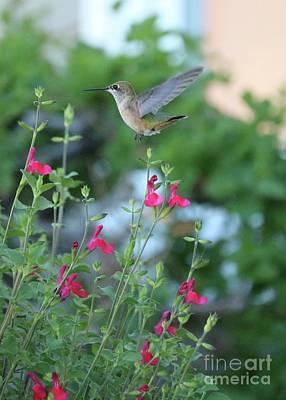 Vintage Automobiles - Carefree Hummingbird by Carol Groenen