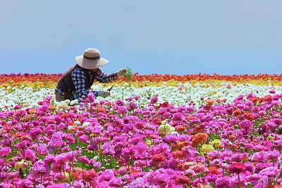Outdoor Graphic Tees - Carlsbad Flower Fields California by Ram Vasudev