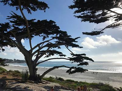 Moody Trees - Carmel Beach by Luisa Millicent