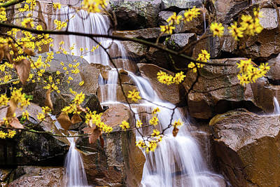 Abstract Male Faces - Cascading Waterfall Behind Yellow Flowers by Delaney Van Vranken