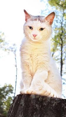 Impressionist Landscapes - Cat Beauty Portrait by Yelena Sokolov