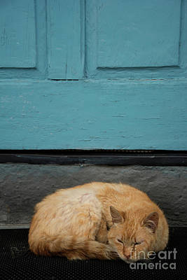Animals Royalty-Free and Rights-Managed Images - Cat brown by a blue door by Carmen Nasarre