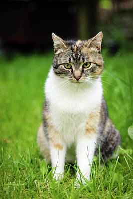 Caravaggio - Cat funny expression. Felis catus domesticus relax in grass and watch actions and changes in owner garden. Kitten with green eyes sits and looks bored. Czech republic, europe by Vaclav Sonnek