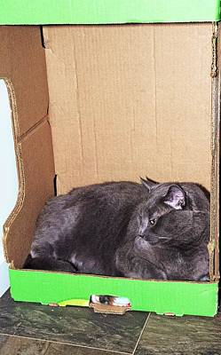 Pop Art Rights Managed Images - Cat in a box Royalty-Free Image by Karl Rose