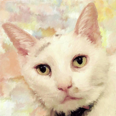 From The Kitchen - Cat  Portrait by Portraits By NC
