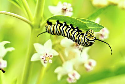 Kids Cartoons - Caterpillar under leaf  by Geraldine Scull