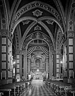 Animal Portraits - Cathedral in Black and White by Mary Machare