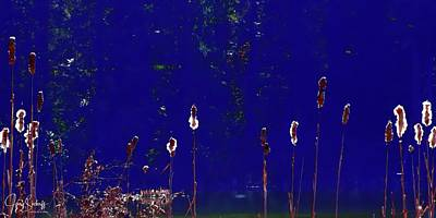 Jerry Sodorff Royalty-Free and Rights-Managed Images - Cattails Against Blue by Jerry Sodorff