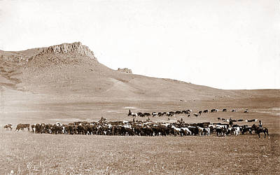 Modern Kitchen - Cattle roundup near Great Falls Montana circa 1890 Geo B Bonnell by Artistic Rifki