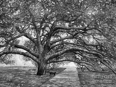Royalty-Free and Rights-Managed Images - Century Tree 2 in Black and White by Hailey E Herrera