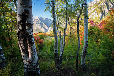 Have A Cupcake - Changing Leaves in the Wasatch of Utah by James Udall
