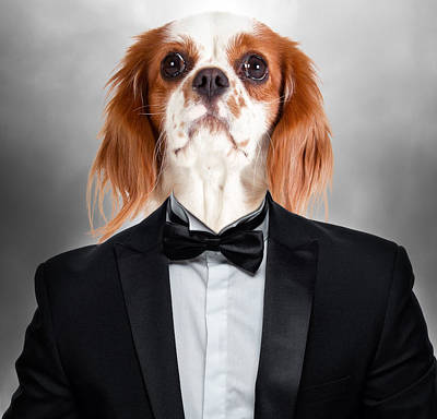Surrealism Digital Art - Charles Spaniel Dog in Tuxedo Suit Surreal by Barroa Artworks