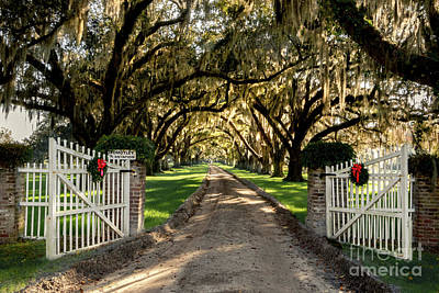 Queen Rights Managed Images - Charleston Plantation Entrance at Christmas Royalty-Free Image by Norma Brandsberg