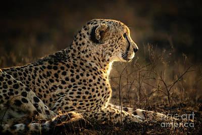 Katharine Hepburn - Cheetah Profile by Jamie Pham
