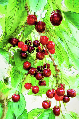 Vintage Automobiles - Cherries Ripening in Swiss Sunshine by Gina Dittmer