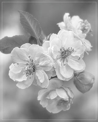 Crazy Cartoon Creatures - Cherry Blossom Cluster in Black and White by Teresa Wilson