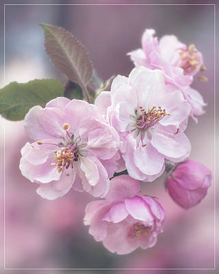 Abstract Stripe Patterns - Cherry Blossom Cluster by Teresa Wilson