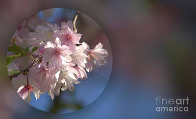 Kitchen Collection - Cherry Blossom Time by Dennis Heller
