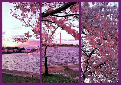 Winter Animals - Cherry Blossoms Washington DC by Gary F Richards