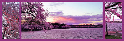 Superhero Ice Pop - Cherry Blossoms Washington Pano by Gary F Richards