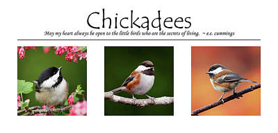 Photograph - Chickadees Poster by Brad Mitchell