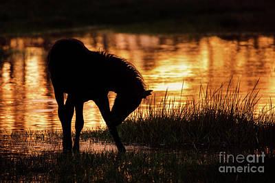 Photograph - Chincoteague Foal by Shelley Paulson