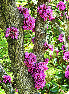 Cactus Royalty Free Images - Chinese Redbuds Royalty-Free Image by Emmy Marie Vickers