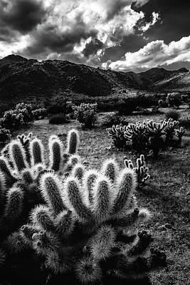 Outerspace Patenets - Cholla Lights by Laura Roberts