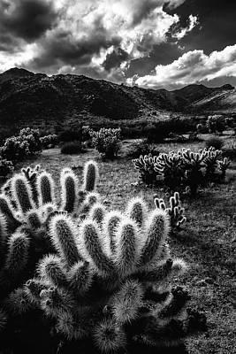 Keith Richards - Cholla Lights by Laura Roberts