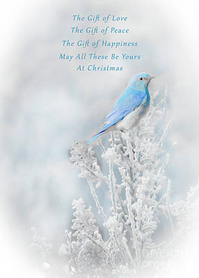 Comedian Drawings - Christmas Bluebird Art Photo by Tracie Fernandez