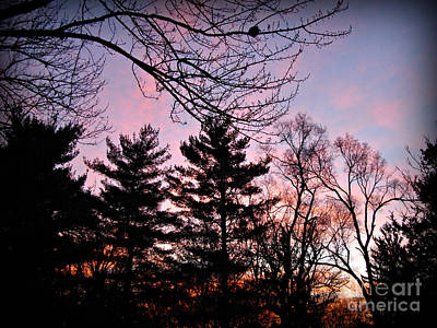 Frank J Casella Royalty-Free and Rights-Managed Images - Christmas Sunrise 2019 by Frank J Casella