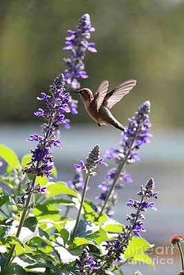 Grace Kelly - Classic Hummingbird Pose by Carol Groenen